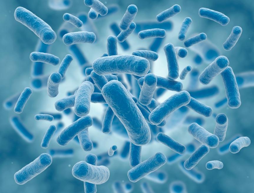 Los beneficios de losprobióticos
